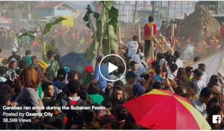 Carabao ran amok during the Subanen Festival held at Cotta grounds, Ozamiz City