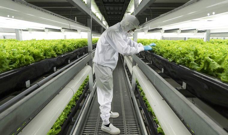 Skyscraper farms spread across countries