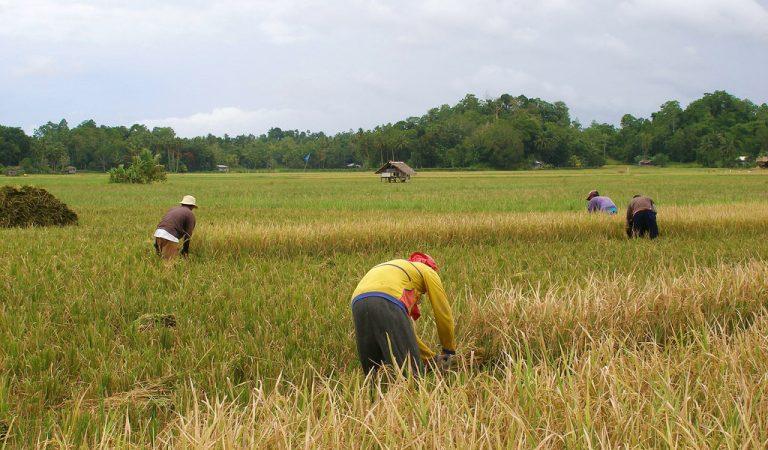 "No more ""Rice Crisis"""