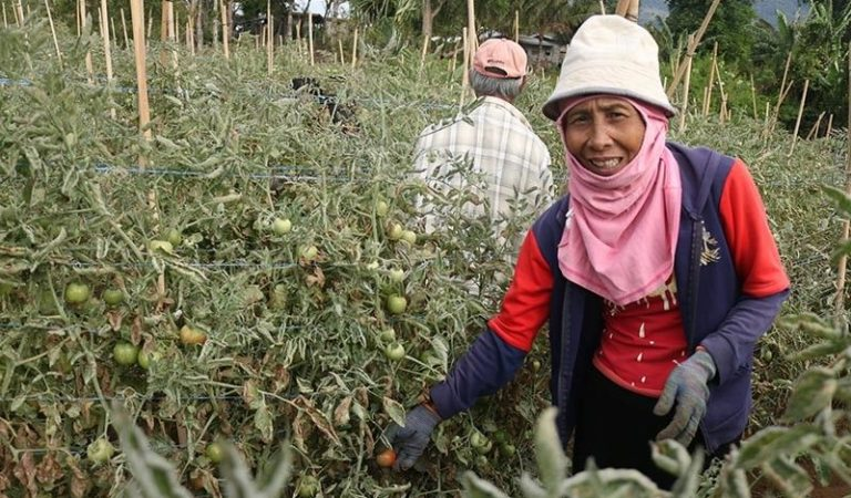 Workers in Agriculture Dominated Davao Region