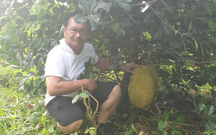 Piñol Introduced the Cultivation of Abuyog Sweet Jackfruit