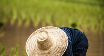 farmers in bangsamoro