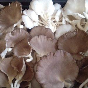 Mushroom Industry
