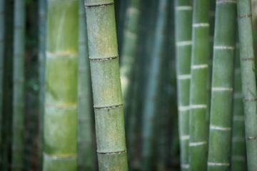 bamboo production