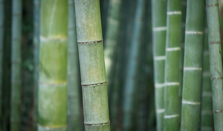 Proposed Bill to Improve Bamboo Production Plantation