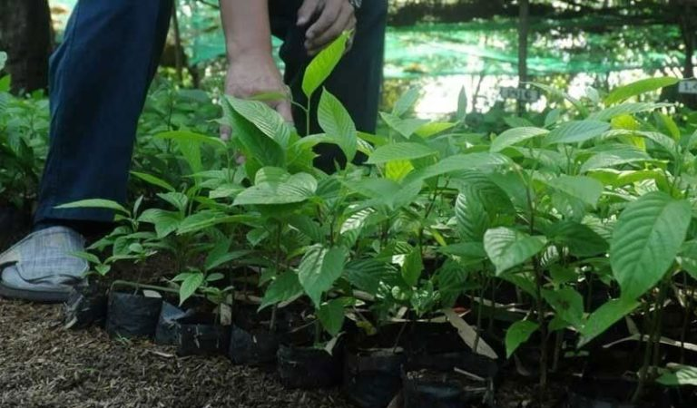 Cebu to Plant 3M Seedlings to Fight Climate Change