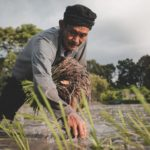 credit facility to aid rice local farmers