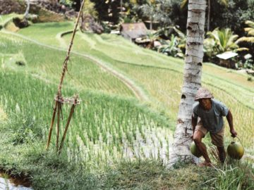 present impact of rice tariffication