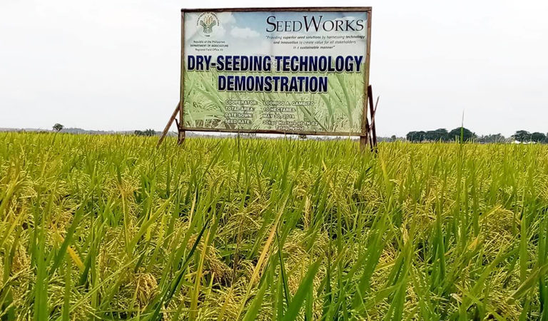 New Rice Seed Variety to Reduce Input Costs of Farmers