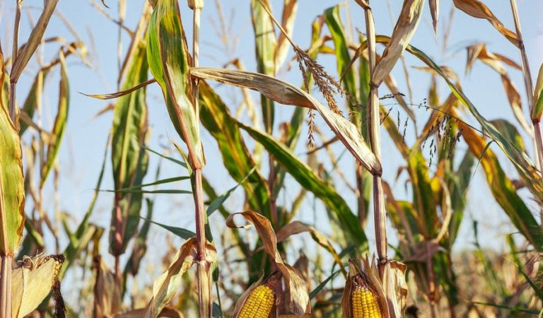 Lawmaker Pushes Weather-Based Crop Insurance