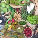organic farming in iloilo
