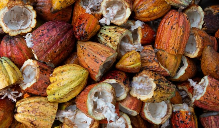 Western Visayas aims 1.5 MT of Cacao Production in 2022