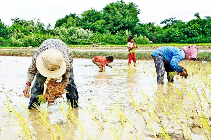 Family Farming to Combat Food Insecurity