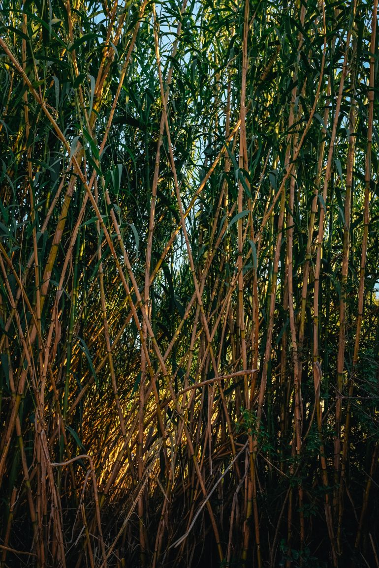 development of bamboo industry