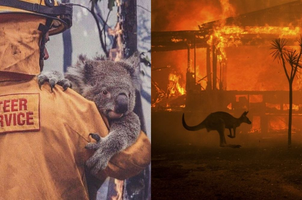 Photo: rojakdaily.com/news/article/8400/koalas-kangaroos-and-almost-half-a-billion-animals-killed-in-australia-s-raging-wildfire