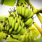 banana industry stakeholders