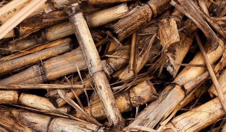 DA-PhilMech Eyed Sugarcane Waste as Animal Feeds