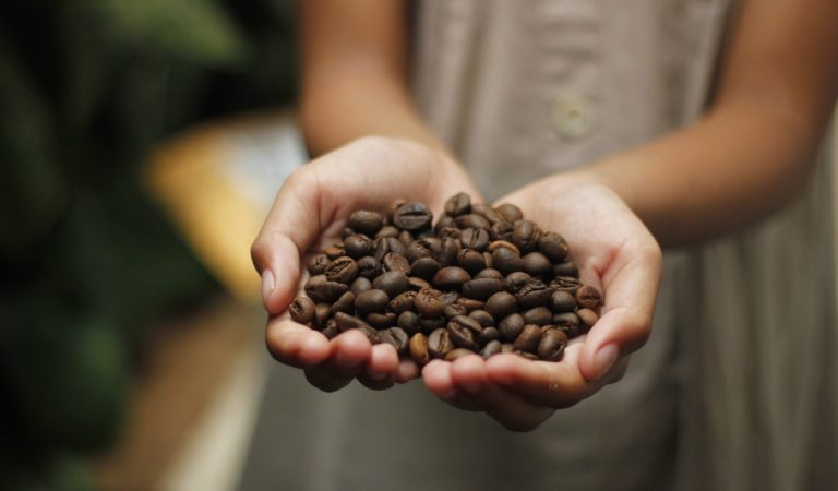 17,000 ha in Davao City Eyed for Coffee Production