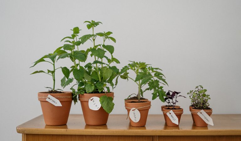 Herbs: Repel Pests and Insects Naturally with Ease